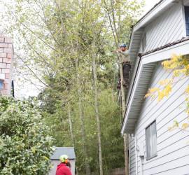 Arborist Expertise Tree Service Stump Grinding Tree